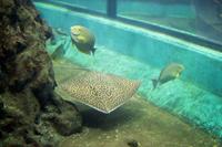 Океанариум Пхукета и его обитатели: как добраться, что посмотреть, фото рыб